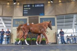 Selling Racehorses – FAQs