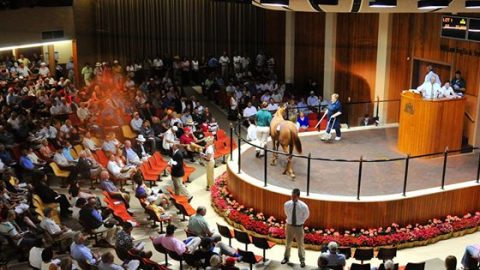 The Regulatory Regime governing the syndication of thoroughbred racehorses.